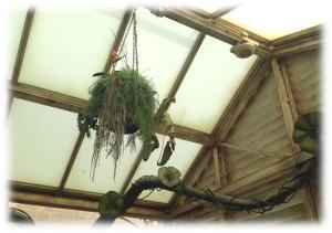 スプラウト先生の温室